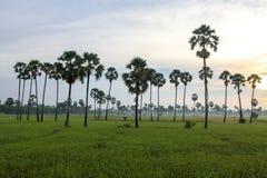 La ferme de champ du Cambodge dans le kampong spue province Photo stock