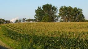 La ferme de maïs cultive le mi champ de vert d'été avec des arbres avec le ciel bleu Photo libre de droits