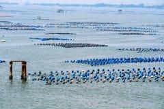 La ferme de mollusques et crustacés est faite en réservoir en plastique résiduel avec l'ONU de corde photos libres de droits