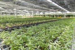 La ferme organique est système agricole rapidement développé maintenant Photographie stock