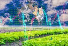 La ferme végétale organique non-toxique et le fond du ciel et de la terre, et les milieux courants de graphique dégagent le paysa photos libres de droits