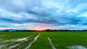 la ferme verte de riz aux phrae du nord Thaïlande Images stock