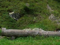 L'aroud de jour la montagne Image stock