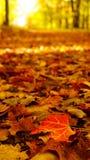 La feuille a couvert le chemin en automne Images libres de droits