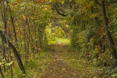 La feuille a couvert le chemin en automne dans une forêt Photos stock