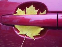 La feuille d'érable jaune a remplié dedans la poignée de portière de voiture Images libres de droits