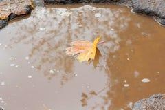 La feuille d'érable jaune se situe dans un nid de poule rempli avec de l'eau La route asphaltée par mauvais Assiette de la route  photo libre de droits