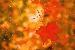 La feuille d'érable rouge avec de l'eau se laisse tomber sur le verre photographie stock libre de droits