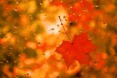 La feuille d'érable rouge avec de l'eau se laisse tomber sur le verre photos libres de droits