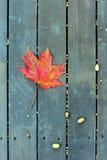 La feuille d'érable rouge sur un banc vert en automne Image libre de droits