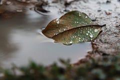 La feuille d'automne dans le magma, l'eau se laisse tomber sur la feuille Photo stock