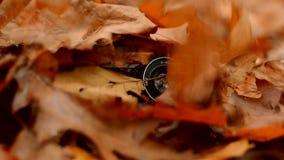 La feuille d'automne tombe sur le vieil appareil-photo banque de vidéos