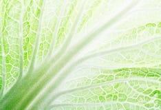 Feuille de salade Image stock