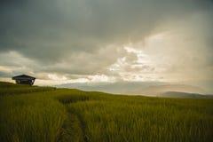 La feuille et le riz mettent en place dans le jardin Photos libres de droits