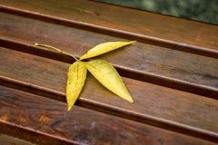La feuille jaune est sur le banc humide dans le weather_ pluvieux photos stock