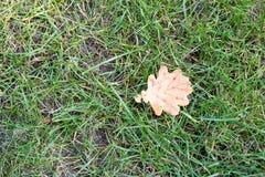 La feuille jaune sèche est tombée sur l'herbe verte Photographie stock libre de droits