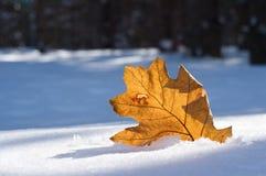 La feuille orange est en novembre tombée Image libre de droits