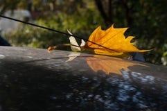 La feuille tombée d'arbre décore l'antenne d'une voiture Image libre de droits