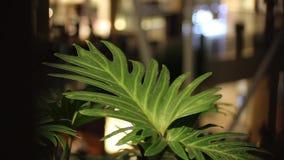 La feuille verte de la fleur se déplace le vent, silhouettes brouillées des personnes marchant à l'arrière-plan Centre commercial clips vidéos