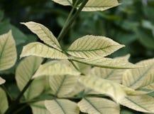 La feuille verte sur une branche dans la perspective d'autre part Photo stock