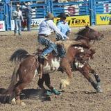 La Fiesta De Los Vaqueros,图森,亚利桑那 库存图片