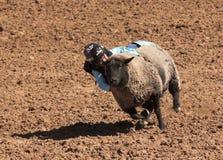 A La Fiesta De Los Vaqueros Junior Rodeo Stock Image