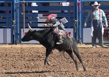 A La Fiesta De Los Vaqueros Junior Rodeo Stock Photo