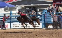 A La Fiesta De Los Vaqueros, Tucson, Arizona. Tucson, Arizona - February 15: The La Fiesta De Los Vaqueros Rodeo on February 15, 2014, in Tucson, Arizona Stock Images