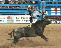 A La Fiesta De Los Vaqueros, Tucson, Arizona Stock Photography