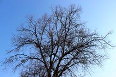 La figura de la sombra de ramas Fotografía de archivo