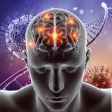 la figura médica 3D con el cerebro destacó en las células del virus y la DNA Imágenes de archivo libres de regalías