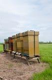 La fila de la abeja de madera encorcha en un campo Imagen de archivo libre de regalías