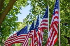 La fila de los E.E.U.U. señala agitar por medio de una bandera afuera en el parque al aire libre con los árboles en fondo Fotografía de archivo