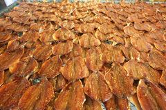 La fila de muchos secó la caballa de los pescados separada en la red Mariscos que procesan para la venta en el mercado del local  imagen de archivo libre de regalías