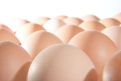 La fila del pollo Eggs el fondo Imagenes de archivo