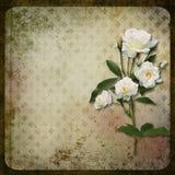 La filiale delle rose su un fondo dell'annata Fotografia Stock
