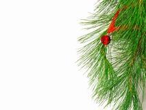 La filiale di un albero di Natale Fotografia Stock Libera da Diritti