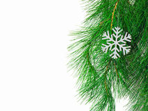 La filiale di un albero di Natale Fotografia Stock