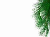 La filiale di un albero di Natale su priorità bassa bianca Fotografia Stock