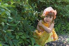 La fille à un buisson de chèvrefeuille Image stock