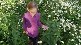 La fille adorable de la jeunesse marchant dans le domaine vert avec la camomille blanche fleurit clips vidéos