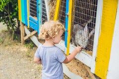 La fille alimente des lapins dans le parc animalier Images stock
