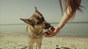 La fille apprécient une promenade de détente par la plage l'été avec son chien Crabot à la mer Vue aérienne du vol de bourdon clips vidéos
