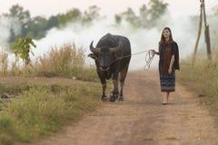 La fille asiatique dans la campagne, marchant de retour autoguident avec son Buffalo Images stock