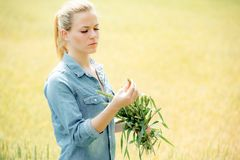 La fille assez jeune tient des oreilles de blé au champ jaune du whe images stock