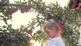 La fille assez petite sélectionne grand Apple rouge d'un arbre, sur un beau fond de ciel au coucher du soleil banque de vidéos