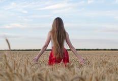 La fille avec de longs cheveux se tenant avec elle de nouveau au champ de blé a tendu des mains et admirer le ciel de soirée Images libres de droits