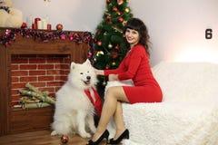 La fille avec le grand chien à l'arbre de fête Images stock