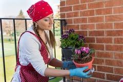 La fille avec le pot de fleurs replantent la fleur de la violette africaine image stock