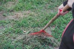 La fille avec un râteau nettoie fraîchement l'herbe de coupe de la pelouse photos libres de droits